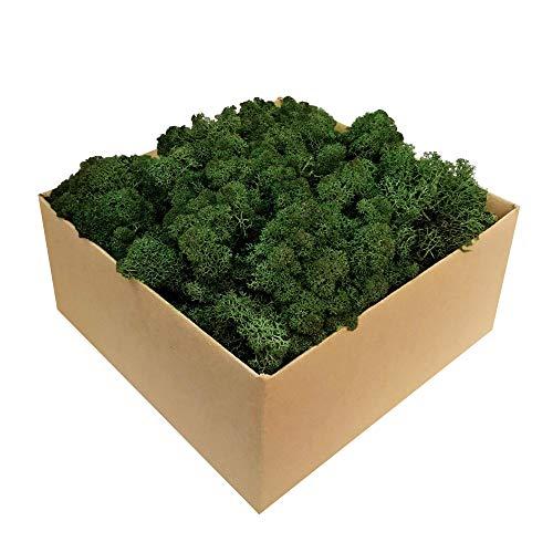 GJS Islandmoos - Moos in 1kg / 500g / 200g, versch. Farben - Echtes konserviertes Natur-Moos (Island) zum Basteln, Dekomoos für die Deko zu Ostern, Modellbau (dunkelgrün, 1kg)