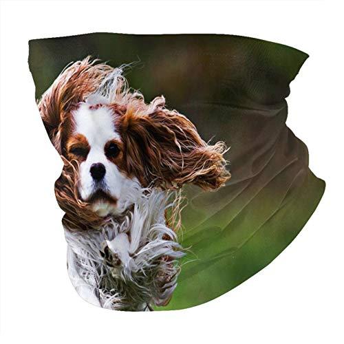 spaniel volador perro mascotas animales lindos sin costuras Multifuncional Headwear Variedad Bufanda Cabeza Diseño Personalizado Capucha Deportes al aire libre Diadema