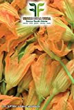 40 C.ca Semi Zucchino da fiori - Cucurbita Pepo In Confezione Originale Prodotto in Italia - Zucchine da fiore