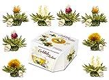 """Variación de flores de té """"Té Floreciente Teelini� de Creano, en un exclusivo formato para tazas / 8 flores de té en 4 variaciones diferentes (té blanco)"""