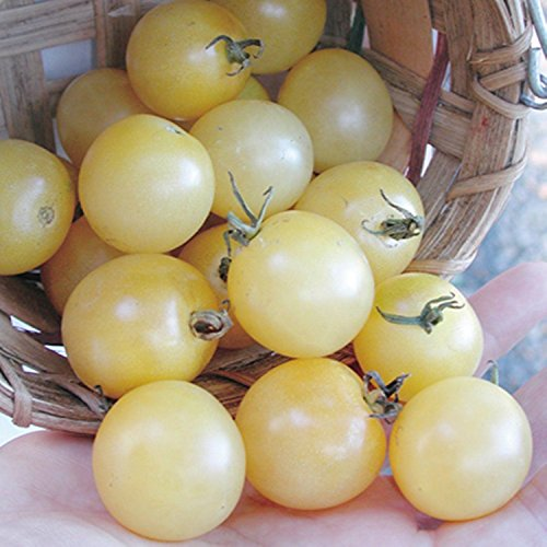 snow white tomato seeds - 1