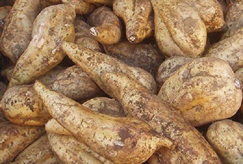 新芋(2020年産) 鹿児島県産 黄金千貫 Sサイズ以上の混合 1箱:約2kg入り