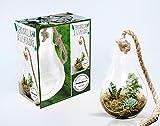 Coffret Ampoule terrarium