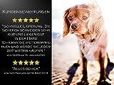 """Fellscheren-Set Hunde-Haarschere Gebogen und Gerade 16,5 cm und Pfotschere 11,2 cm mit Mikroverzahnung """"BLUE TITANIUM"""" - 5"""