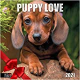 Puppy Love - 2021 Wall Calendars by Red Ember Press - 12' x 24' When Open - Thick & Sturdy Paper - Happiness is a New Puppy