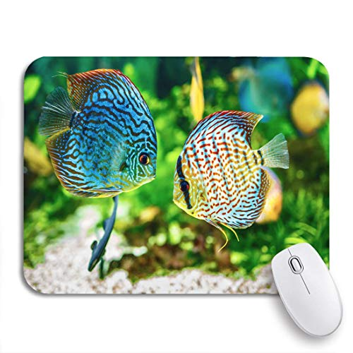 Adowyee Gaming Mouse Pad Blauer Fisch Symphysodon Diskus im Aquarium auf grünem buntem rutschfestem Gummi-Backing-Mousepad für Notebooks Computer Mausmatten