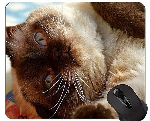 Yanteng Alfombrillas de ratón, Alfombrilla de ratón de Pelo Corto con impresión de Gato Personalizada, Alfombrilla de ratón británica de Pelo Corto con Borde Cosido