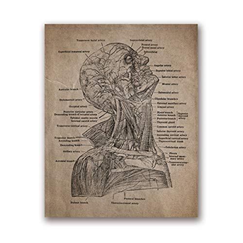 LiMengQi Estampado y pósteres del Esqueleto de Anatomía Humana, Arte anatómico de la Pared del cráneo Pintura en Lienzo Carteles Vintage decoración de la Oficina del médico (No Frame)