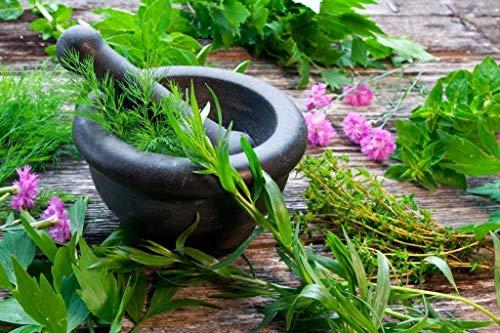 Paquete de hierbas con 6 hierbas/apio (Maggie), cilantro, cebollino, berro, eneldo y...