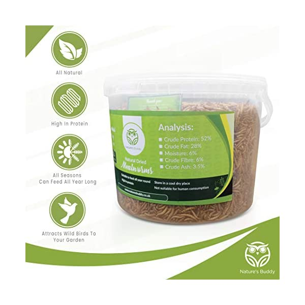 Nature's Buddy Natural Dried Mealworms - 5L Tub for Wild Birds - High Protein, All Seasons, All Natural Bird Food