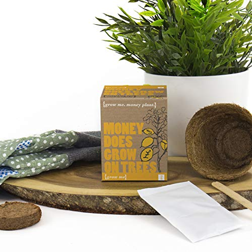 Mags - Coffret Cadeau Argent-Prospérité - Grow Me, Money Does Grow On Trees - Graines pour Arbre à Sous