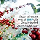 Garden of Life Dr. Formulated Brain Health Memory & Focus for Adults 40+, 60 Count #2
