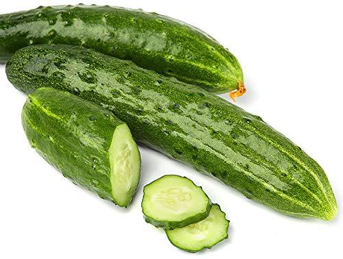 Gurke Marketmore 76 - Salatgurke - 20-25 cm in Länge - sehr ertragreich - 20 Samen