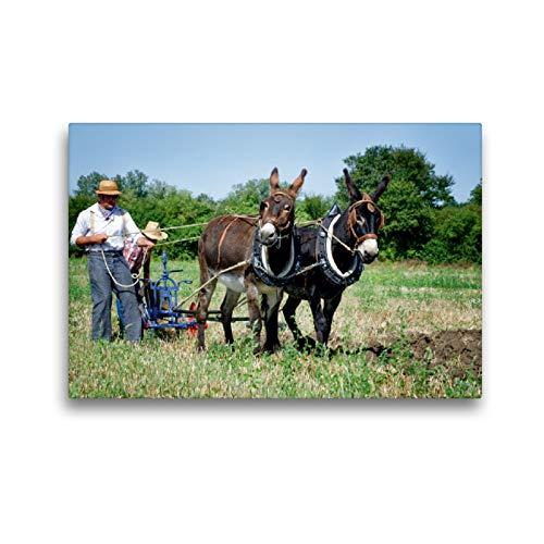 Premium Textil-Leinwand 45 x 30 cm Quer-Format Feldarbeit mit zwei Eseln | Wandbild, HD-Bild auf Keilrahmen, Fertigbild auf hochwertigem Vlies, Leinwanddruck von Alain Gaymard
