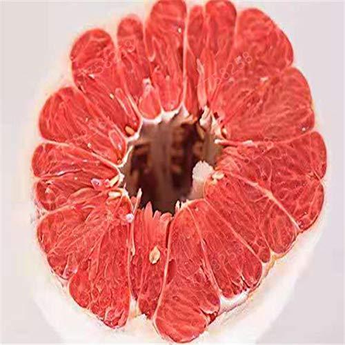GETSO 5pcs de Sac Hardy Mini Pummello Pomelo Arbre Nain kao Pan Pamplemousse! Plante Rare Bonsai Fruit pour la Livraison Gratuite de Jardin à Domicile: 9