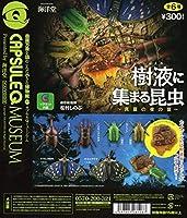 カプセルQ 樹液に集まる昆虫 真夏の夜の宴 【台紙】