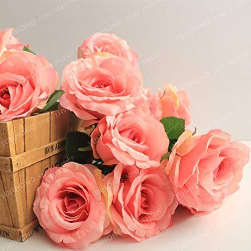 Kalash New 50pcs Rose Blumensamen für Gartenhellrosa 2