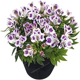 Accessory Home - 100 Pcs/Bag Alstroemeria Bonsai Peruvian Lily Princess Flower Planta for Home