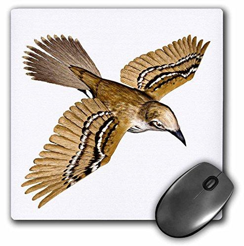 3dRose Boehm Graphics Bird - Cozumel Thrasher - Mousepad (mp_77201_1)
