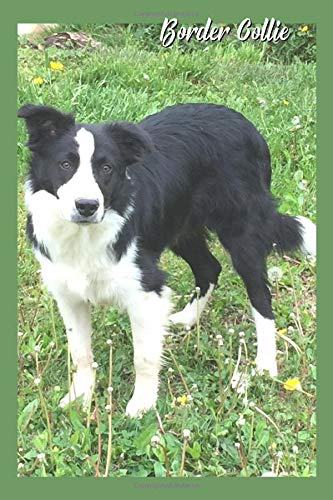 Border Collie: Border Collie Journal, Notebook, Diary, Thoughts, Blessings, Notes
