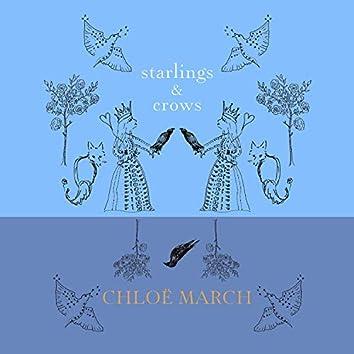 Starlings & Crows