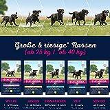 Eukanuba Senior Large Breed Trockenfutter (für ältere Hunde großer Hunderassen ab 7 Jahre, Premiumfutter mit Huhn), 15 kg Beutel - 6