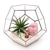 Dodecaedro grande terrario de cristal geométrico hecho a mano vidrio Maceta/Moderno Maceta para interior Jardinería/Vidriera terrario–Hecha a mano por LoveGlass