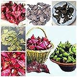 80pcs / bolsa italiana castaña de agua al aire libre Semillas de frutas jugosas Nutrien Bonsai planta en maceta ornamental de jardín por Tiesto