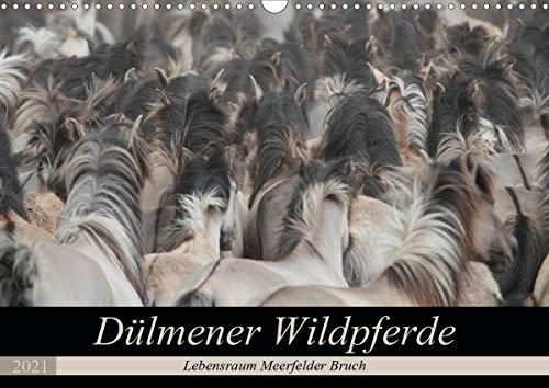 Dülmener Wildpferde - Lebensraum Meerfelder Bruch (Wandkalender 2021 DIN A3 quer)