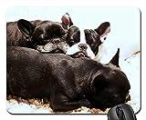 Yanteng Alfombrillas de ratón para Juegos, Alfombrillas de ratón, Cachorros, Perros y Perros Bulldog francés Animales de compañía