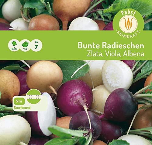 Carl Pabst 166109 Bunte Radieschen Zlata, Viola, Albena, Saatband 5m (Radieschensamen)