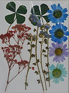 handi-kafu colorato viola bianco rosa Daisy Real pressato fiori secchi