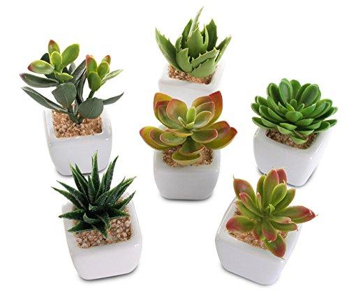 levandeo 6er Set Sukkulenten B x H 4,5x9cm Kunstpflanze Grün Weiß Kunstblume Deko