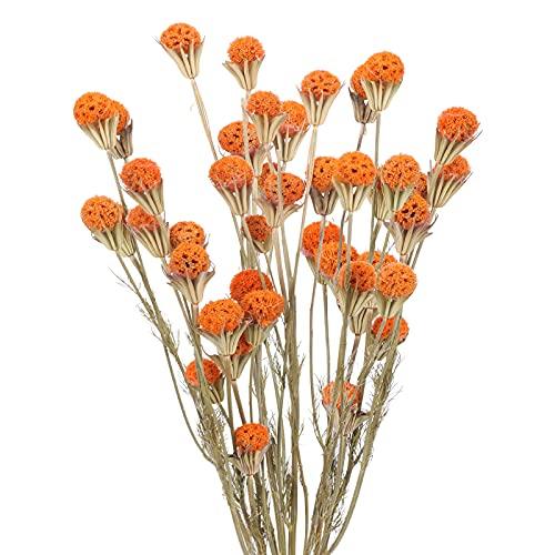 XHXSTORE 40PCS Ramo de Flores Secas Craspedia Flores Secas Naturales Naranja para Florero Ramo DIY Arreglo Floral Mesa...
