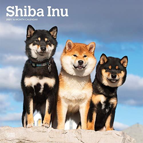 Shiba Inu 2021 - 16-Monatskalender mit freier DogDays-App: Original BrownTrout-Kalender [Mehrsprachig] [Kalender] (Wall-Kalender)