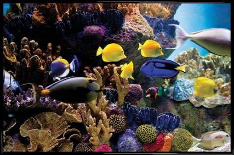 1art1 Pesci Poster Stampa e Cornice (Plastica) - Tropical Fish & Coral (91 x 61cm)