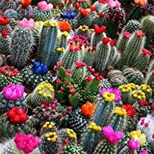 50Pcs Mix Succulent Seeds Exotic Cactus Seeds Flower Seeds Ers for Home & Garden : 21