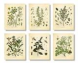 Set mit 6 Kräutern Botanischen Drucken, ungerahmt, 20,3 x