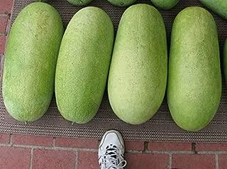 Charleston Gray Watermelon! 14+ Seeds! zKE-300