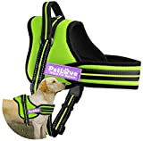 PetLove Dog Harness, Soft Leash Padded No Pull Dog Harness with All Kinds of Size (XXSmall, Green)