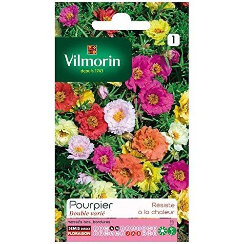 Vilmorin - Sachet graines Pourpier double varié
