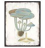 Psychedelic Magic Mushrooms - Hallucinogenic Medicinal Mushrooms - Botanical Prints Art - Psilocybin Spores Trippy Wall Decor - Boho Gifts - Vintage Rustic Kitchen Wall Decor - Hippie Room Decor