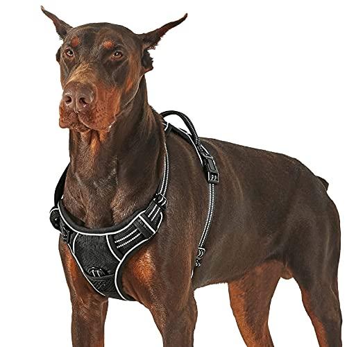 Bedshe -  Lesure Hunde
