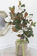 memorial magnolia tree