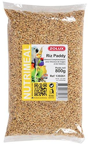 Graines Riz Paddy 800g