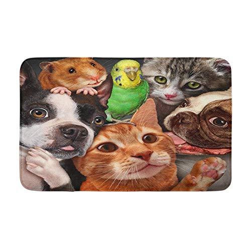 Husdjur grupp koncept som hundar katter en hamster och undulat samlade som en symbol halkfria och absorberande mattor för kök golv badrum och dörrmatta 40 x 60 cm