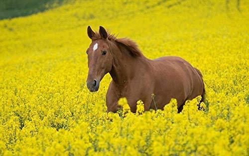 Houten puzzel 1000 stukjes Klassiek Volwassenen Puzzless Horse In Koolzaad Diy Educatief Puzzlehome Decor Uniek cadeau-75X50Cm
