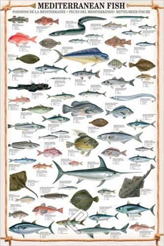 Educational Mediterranean Fish - Mittelmeer Fische Bildung Lernposter Druck
