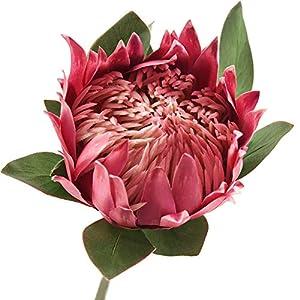 FiveSeasonStuff King Protea Real Touch Silk Artificial Flowers for Wedding Bouquet Home Kitchen 30 Inches Tall Tropical Flower Arrangements Decor 1 Stem (Light Burgandy)