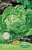 Germisem Marvel of Winter Semillas de Lechuga 4 g